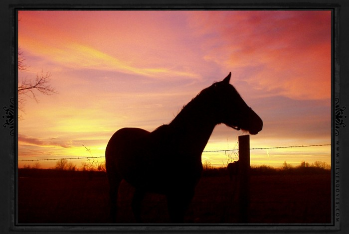horse-silhouette-sunset-photo