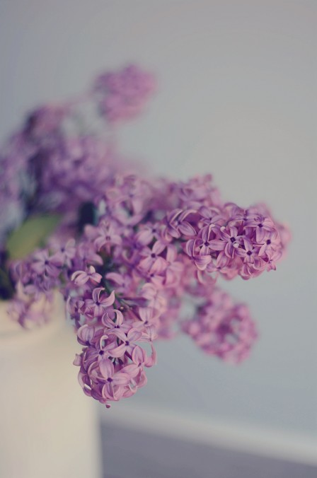 Lilacs in a white spray painted mason jar vase